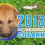 teamfootball.info - с новым годом