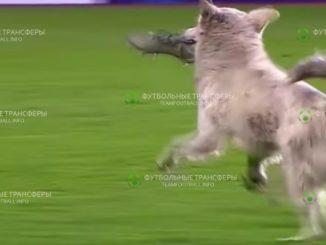 В Боливии живет пес, который также любит проводить время на футбольном поле